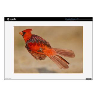 Northern Cardinal adult male in flight Laptop Skins