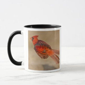 Northern Cardinal adult male in flight Mug