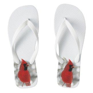 Northern Cardinal Bird Flip Flops