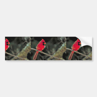 Northern cardinal bumper sticker