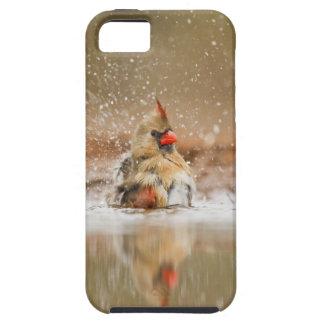 Northern Cardinal (Cardinalis cardinalis) female 2 iPhone SE/5/5s Case