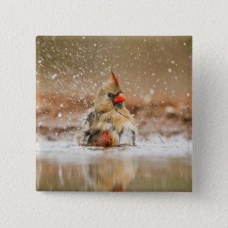 Northern Cardinal (Cardinalis cardinalis) female 2 Pinback Button