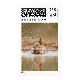 Northern Cardinal (Cardinalis cardinalis) female 2 Postage Stamp