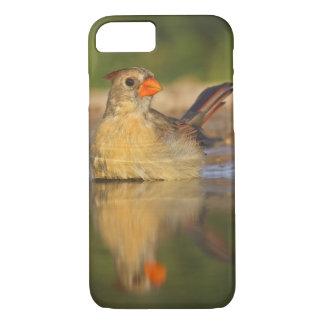 Northern Cardinal (Cardinalis cardinalis) female 3 iPhone 8/7 Case
