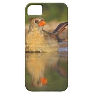 Northern Cardinal (Cardinalis cardinalis) female 3 iPhone SE/5/5s Case
