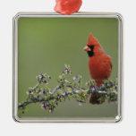 Northern Cardinal, Cardinalis cardinalis,male 2 Metal Ornament
