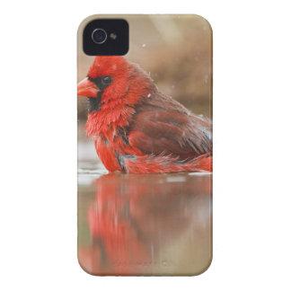 Northern Cardinal (Cardinalis cardinalis) male iPhone 4 Case-Mate Case