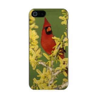 Northern Cardinal, Cardinalis cardinalis,male Metallic iPhone SE/5/5s Case
