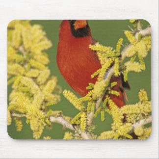 Northern Cardinal, Cardinalis cardinalis,male Mouse Pad