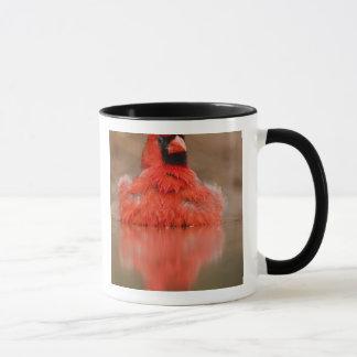 Northern Cardinal Cardinalis cardinalis) male Mug