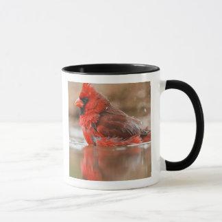 Northern Cardinal (Cardinalis cardinalis) male Mug