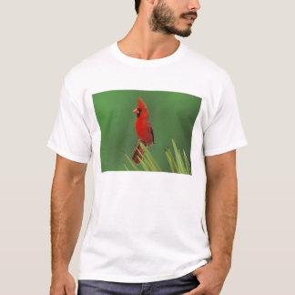 Northern Cardinal, Cardinalis cardinalis,male on T-Shirt