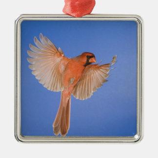Northern Cardinal, Cardinalis cardinalis, male Christmas Ornament