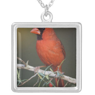 Northern Cardinal, Cardinalis cardinalis, male Silver Plated Necklace