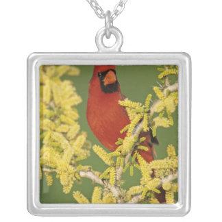 Northern Cardinal, Cardinalis cardinalis,male Square Pendant Necklace