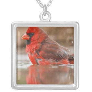 Northern Cardinal (Cardinalis cardinalis) male Square Pendant Necklace