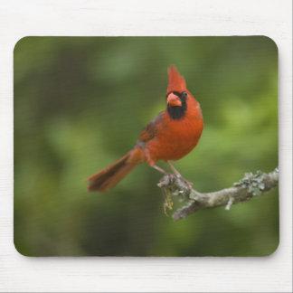 Northern Cardinal, Cardinalis cardinalis, Mouse Pad