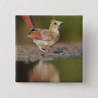 Northern Cardinal Cardinalis cardinalis) Pinback Button