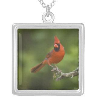 Northern Cardinal, Cardinalis cardinalis, Silver Plated Necklace