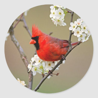 Northern Cardinal Classic Round Sticker