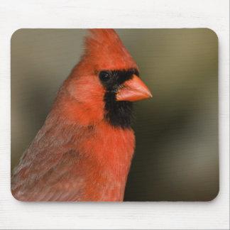Northern Cardinal close up portrait Mouse Pad