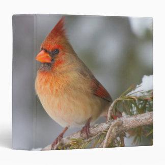 Northern Cardinal female in spruce tree in winter 3 Ring Binder