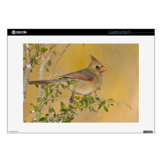 Northern Cardinal female perched on branch Skin For Laptop