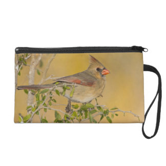 Northern Cardinal female perched on branch Wristlet Purse