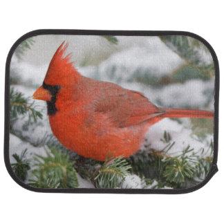 Northern Cardinal in Balsam fir tree in winter Car Floor Mat