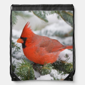 Northern Cardinal in Balsam fir tree in winter Drawstring Bag