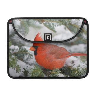 Northern Cardinal in Balsam fir tree in winter MacBook Pro Sleeve