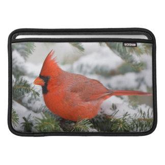 Northern Cardinal in Balsam fir tree in winter MacBook Sleeve