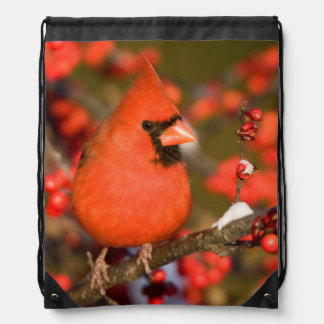 Northern Cardinal in Common Winterberry Drawstring Backpack