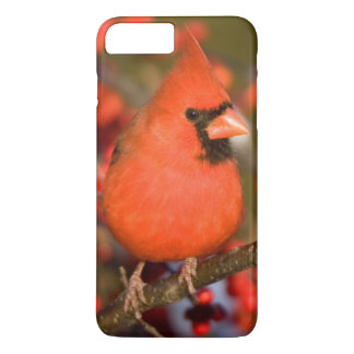 Northern Cardinal in Common Winterberry iPhone 7 Plus Case