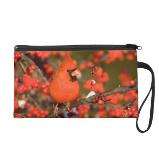 Northern Cardinal in Common Winterberry Wristlet Purse