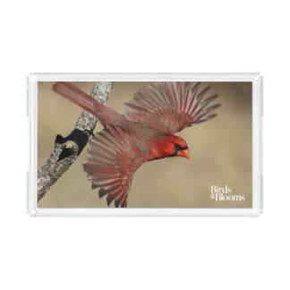 Northern Cardinal In Flight Acrylic Tray