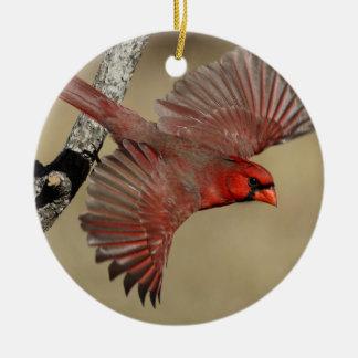 Northern Cardinal In Flight Ceramic Ornament
