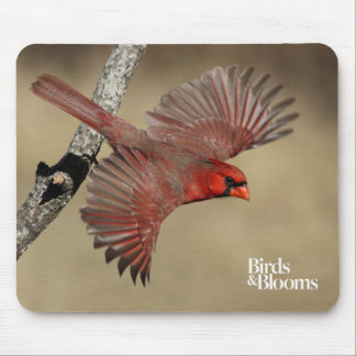 Northern Cardinal In Flight Mouse Pad