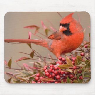 Northern Cardinal in Nandina Heavenly Bamboo Mouse Pad