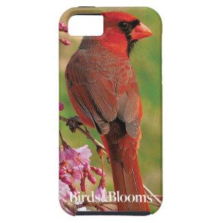Northern Cardinal iPhone SE/5/5s Case