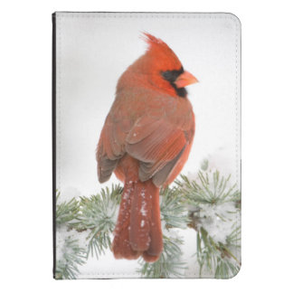 Northern Cardinal male on Blue Atlas Cedar Kindle Touch Cover
