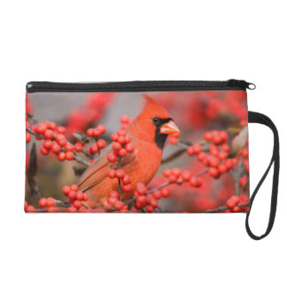 Northern Cardinal male on Common Winterberry Wristlet Purse