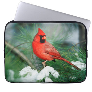 Northern Cardinal male on tree, IL Computer Sleeve