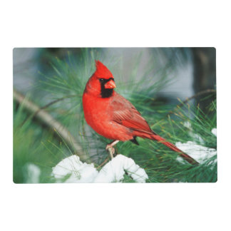 Northern Cardinal male on tree, IL Placemat