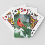 """Northern Cardinal male on tree, IL Playing Cards<br><div class=""""desc"""">Northern Cardinal (Cardinalis cardinalis) male in Pine tree in winter Marion County,  Illinois   Richard &amp; Susan Day / DanitaDelimont.com</div>"""