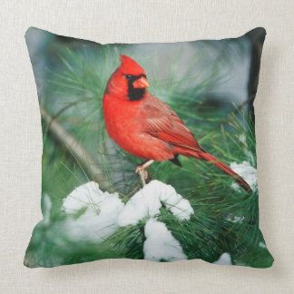 Northern Cardinal male on tree, IL Throw Pillow