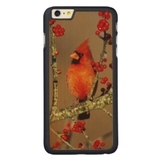 Northern Cardinal male perched, IL Carved Maple iPhone 6 Plus Slim Case