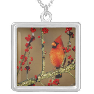 Northern Cardinal male perched, IL Silver Plated Necklace