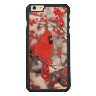 Northern Cardinal male, Winter, IL Carved Maple iPhone 6 Plus Case
