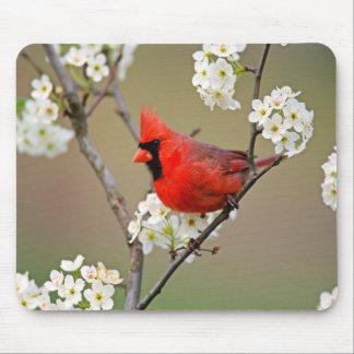 Northern Cardinal Mousepads